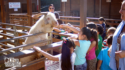 Children enjoy the animals at Centennial Farm
