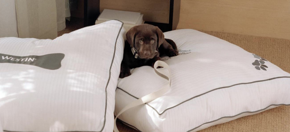 pet friendly hotels costa mesa