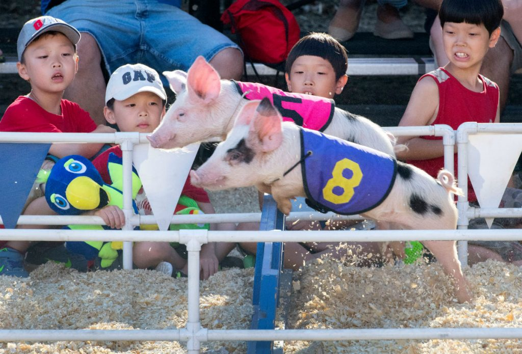 free things to do at the oc fair