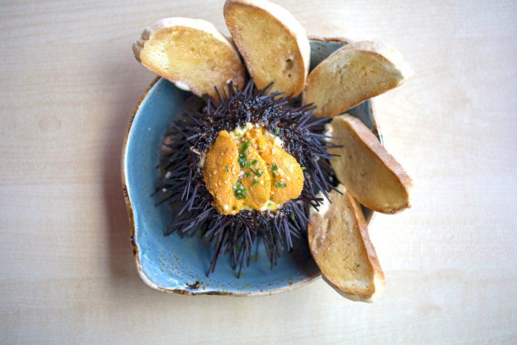 vaca sea urchin