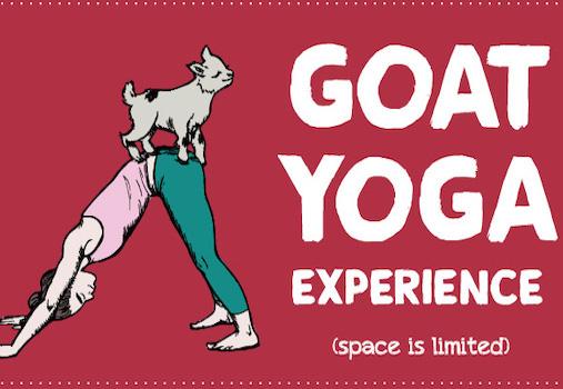 Goat Yoga at the OC Fair & Event Center in Costa Mesa