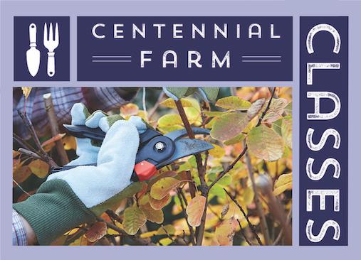 Garden Class: Pruning Fruit Trees - The Basics