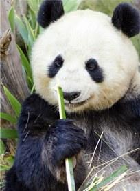 San Diego Zoo Image