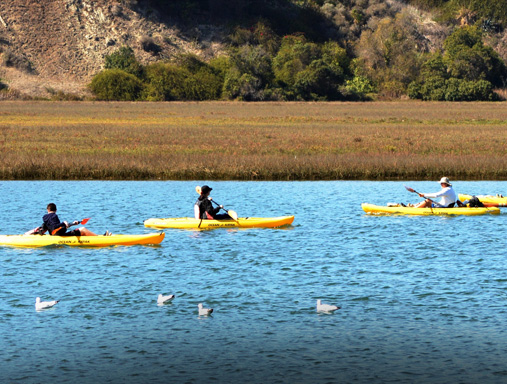 Kayak Tours of Newport Bay